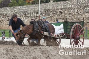 Tiro y Arrastre en el antiguo cauce del Turia. Foto de Manolo Guallart.