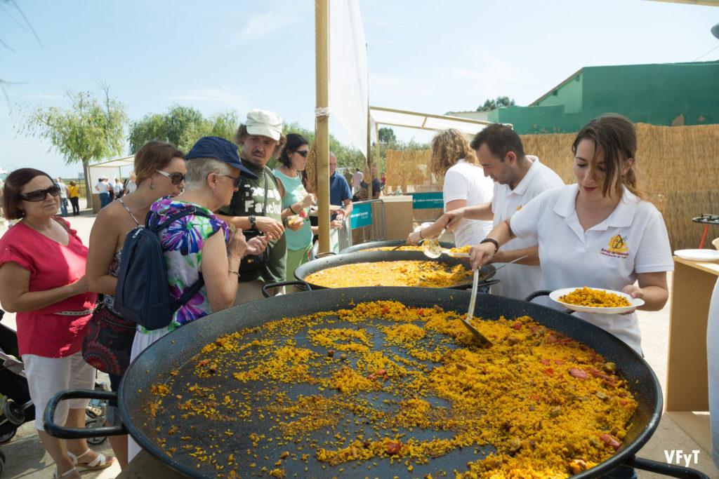 La siega del arroz fiesta y tradici n en el port de - El tiempo en catarroja valencia ...