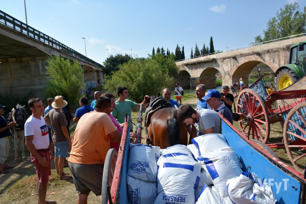 Tiro y arrastre en las fiestas de Riba-roja del Turia. Fotografía de Vicente Almenar